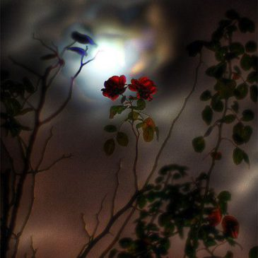 Volle Maan Meditatie | Maan van het Ontwaken