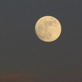 Wordt vrienden met je schaduwzijde met de Volle Super maan in Leeuw