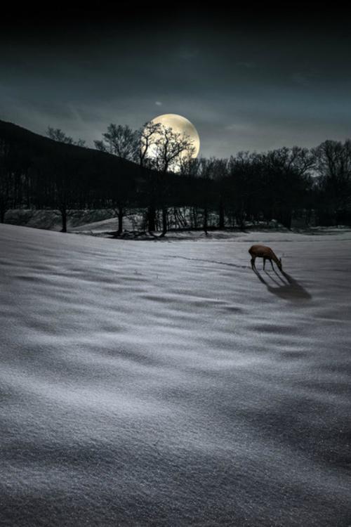 Volle Maan Meditatie   Sneeuwmaan